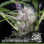SHORT STUFF SEEDBANK - Auto Pink Grapefruit
