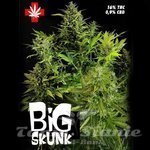 PURE SEEDS - Big Skunk