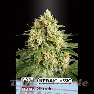 KERA SEEDS - Skunk