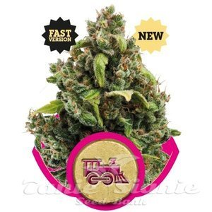 ROYAL QUEEN SEEDS - Candy Kush Express (Fast Version)