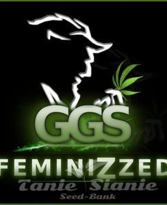 Grzech Grow Seeds - Guerilla Gold x White Widow (Fast Version)