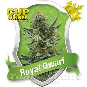 ROYAL QUEEN SEEDS - Auto Royal Dwarf