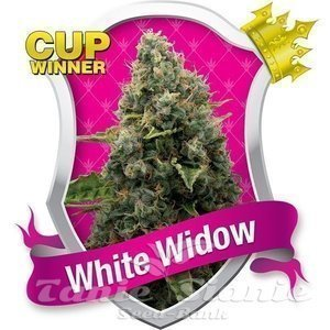 ROYAL QUEEN SEEDS - White Widow®
