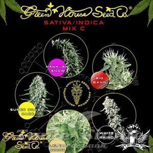 GREEN HOUSE SEEDS - Sativa/Indica Mix C