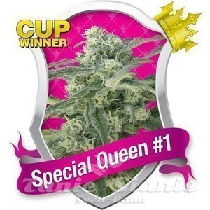 ROYAL QUEEN SEEDS - Special Queen #1®