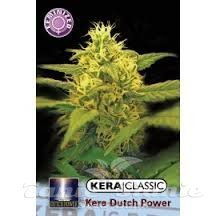 KERA SEEDS - Dutch Power 2.0
