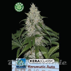 KERA SEEDS - Kera Matic